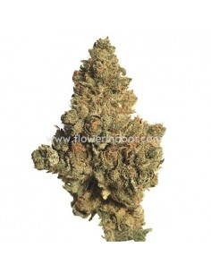 Cogollo CBD Cannatonic