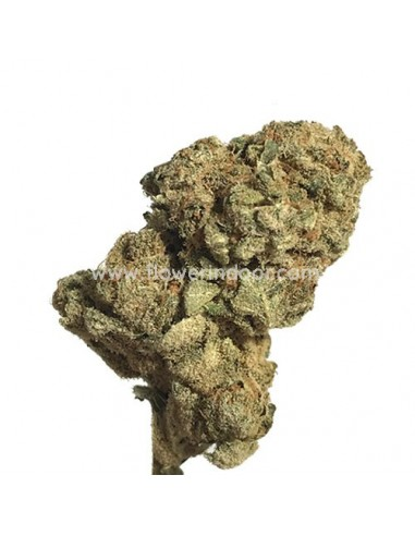 Cogollo CBD - Super Silver Haze Interior