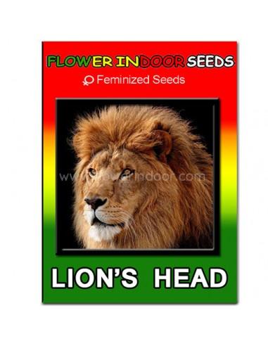 Semillas Lion's Head