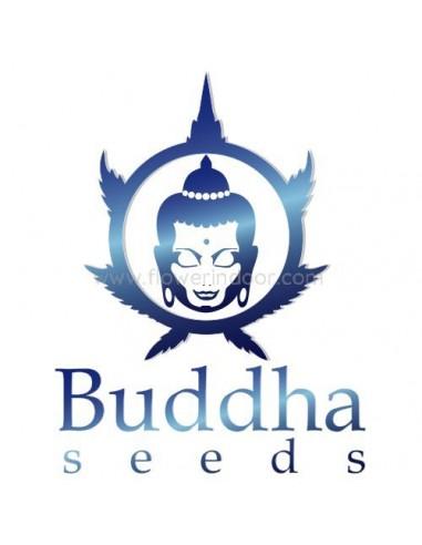Kraken de Buddha
