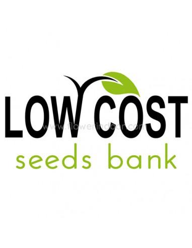 Critikal  de Low Cost Seeds Bank