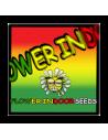 Flower Indoor Seeds