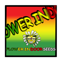 Flower Indoor Seeds